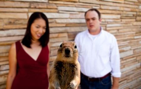 austin_squirrel _crasher-2
